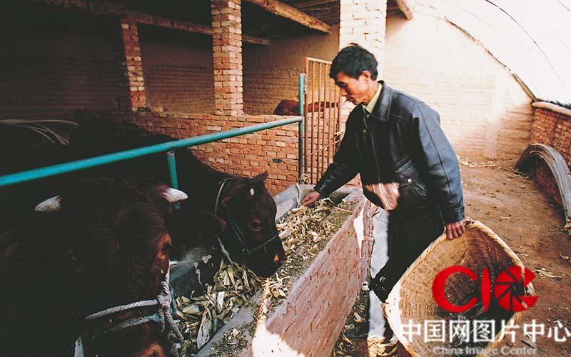 2005年深秋,第六次见到张志民,他在新家搞起的养殖业已经初具规模,全家已经不用再过那因为水、因为钱而发愁的日子了。