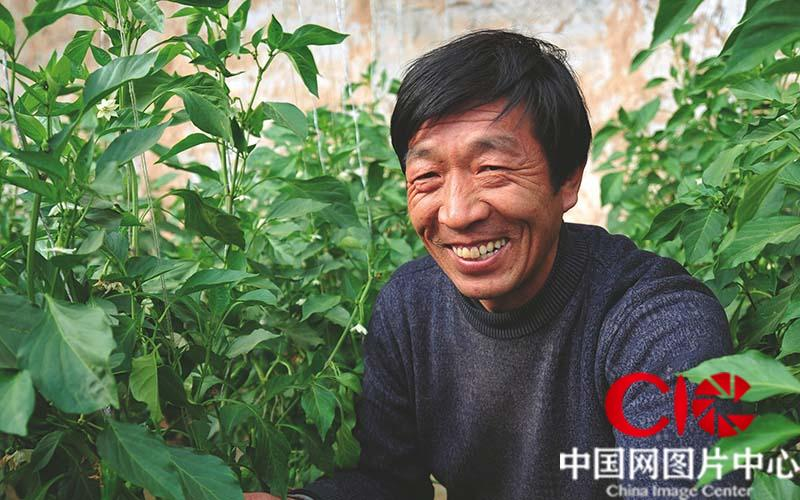 村民万志俊看着自己种的辣椒乐的合不拢嘴。