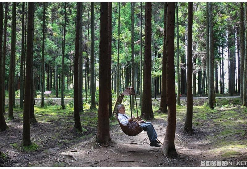 2012年7月22日,重庆石柱中国黄水镇,一位新手独自坐在森林里的老人上淘宝摇椅攻略卖家图片