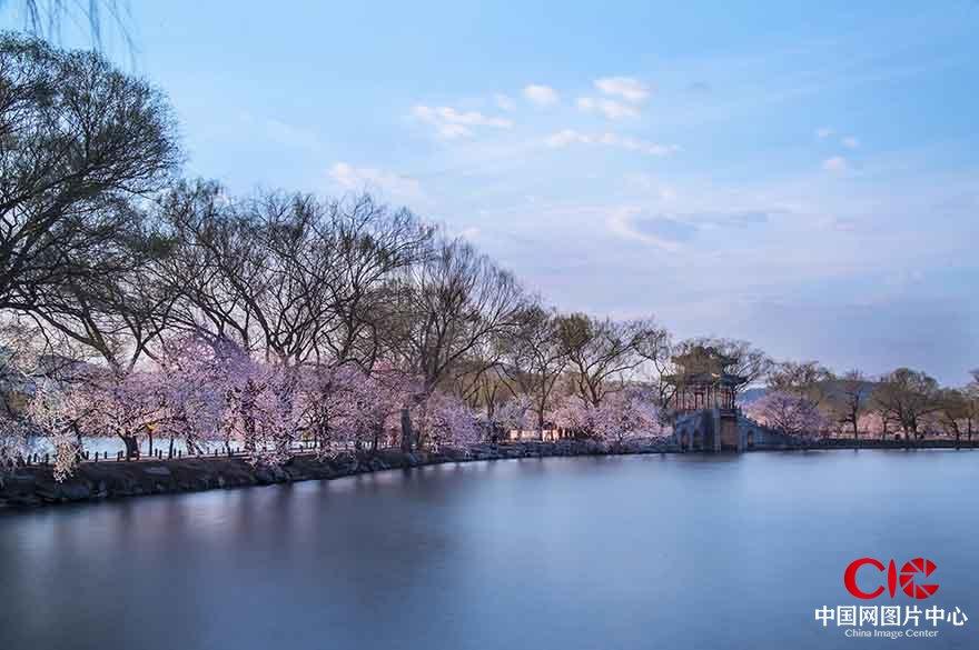 花季昆明湖  張旭