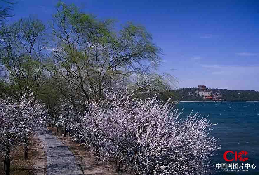 《春风吹遍颐和园》  张利方